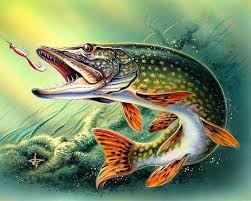 Рассказ про рыб для детей