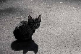 Хемингуэй кошка под дождем краткое содержание