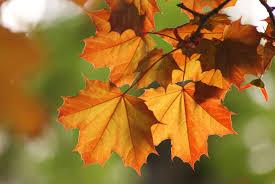 Цитаты про осень на английском