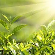 Какие растения приносят пользу людям