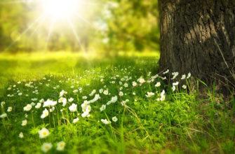 описание весны в художественном стиле