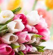 c6c06779bf9 Описание цветка тюльпана