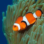 Доклад про рыбу любую 5911