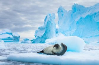 сообщение про антарктиду