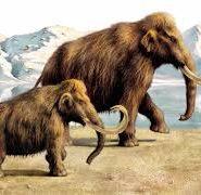 Доклад о мамонтах по истории 9492