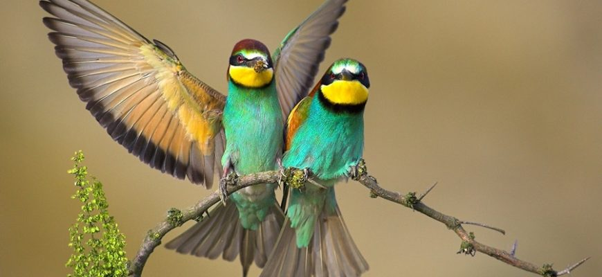 Почему нужно охранять птиц?