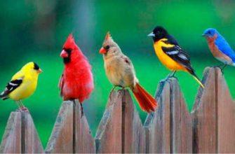 краткое сообщение о птицах