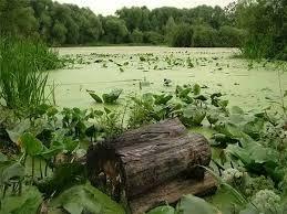 Причины образования болот