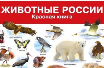 сообщение о животных из красной книги