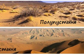 Чем отличается пустыня от полупустыни