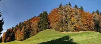 Особенности рельефа смешанных лесов