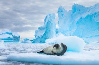 антарктида особенности материка