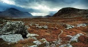 Почвы в зоне тундры