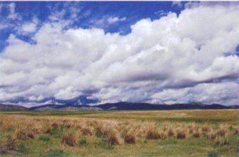 почвы зоны степей