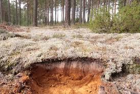 почвы тайги
