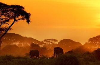 описание кении по плану