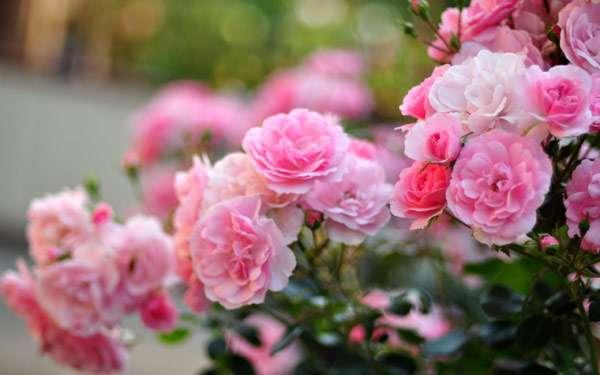 приспособленность цветковых растений