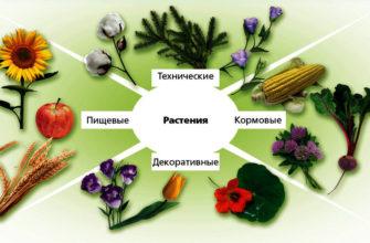Сообщение о покрытосеменных растениях