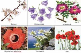 цветковые растения примеры