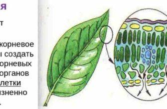 значение испарения для растений
