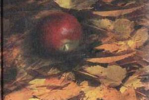 план рассказа красное яблоко