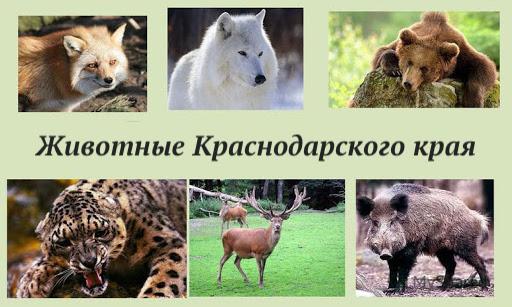 сообщение о животных краснодарского края