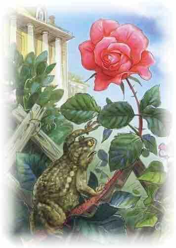 сказка жаба и роза краткое содержание