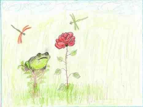 жаба и роза план сказки
